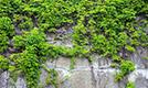 Overgrown Walls